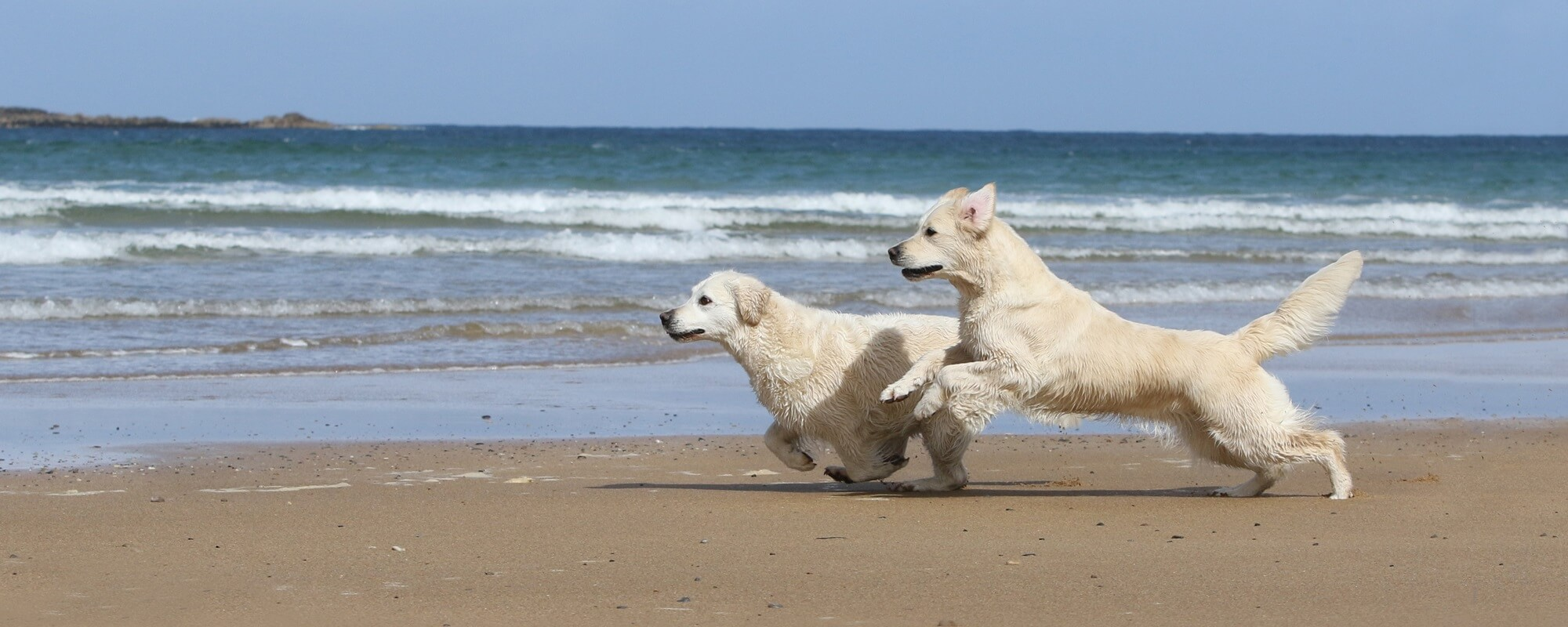 Dog Coaching Susan Weber Lugau